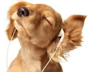 study-english-listening