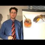 Learn English Idioms Bee